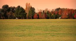 Foto thumbnail unidad Terreno en Venta en  El Campo - Fincas Exclusivas Cardales,  Countries/B.Cerrado  El Campo. Panamericana km 61 Ruta 4