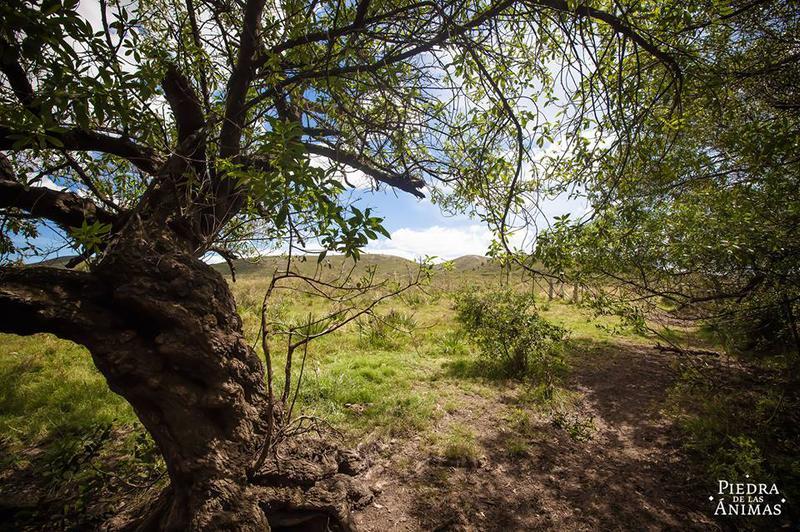 Foto Chacra en Venta en  Pan de Azúcar ,  Maldonado  Camino del Buen Amigo - Ruta 60