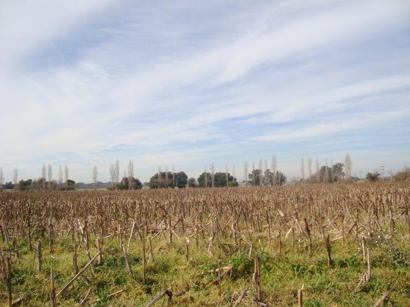 Foto Campo en Venta en  Arroyo De La Cruz,  Exaltacion De La Cruz  32 hectáreas