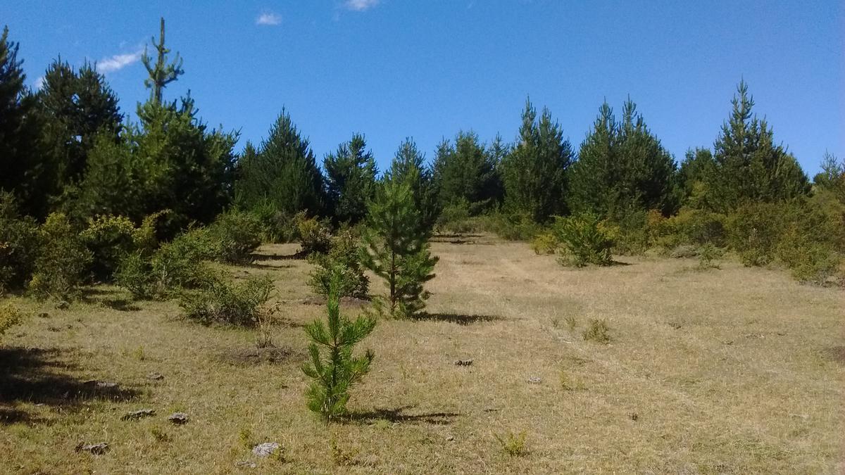 Foto Campo en Venta en  Cholila,  Cushamen  Ruta Provincial 71