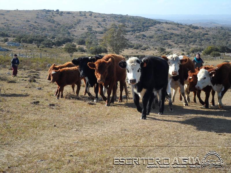 Foto Campo en Venta en  Aiguá ,  Maldonado  Camino Vecinal - 8va sección