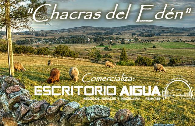 Foto Chacra en Venta en  Pueblo Edén ,  Maldonado  Ruta 12