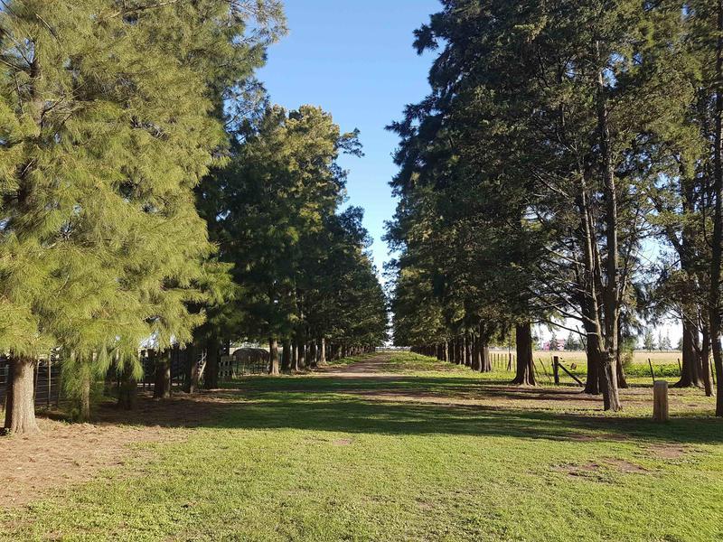 Foto Campo en Venta en  Cañuelas ,  G.B.A. Zona Sur  Ruta 205 Km 74