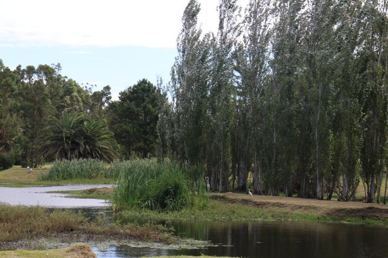 Foto Terreno en Venta en  Punta del Este ,  Maldonado  Punta del Este