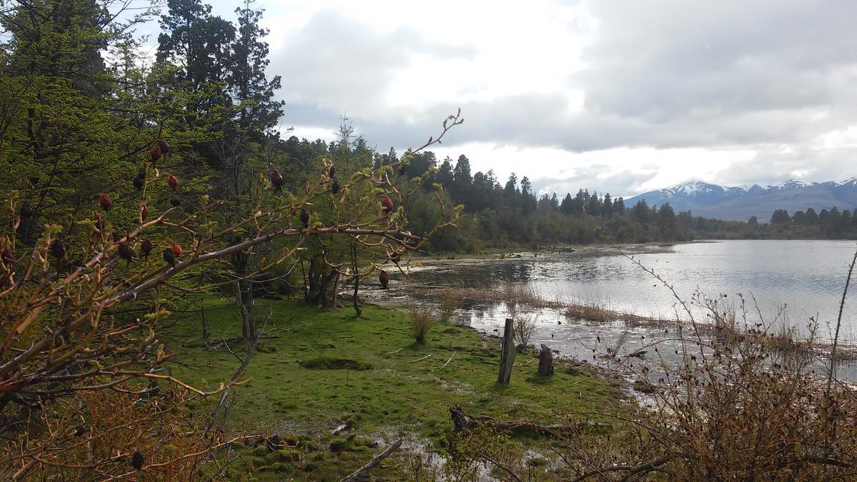 Foto Campo en Venta en  Trevelin,  Futaleufu  Camino a Laguna Brychan
