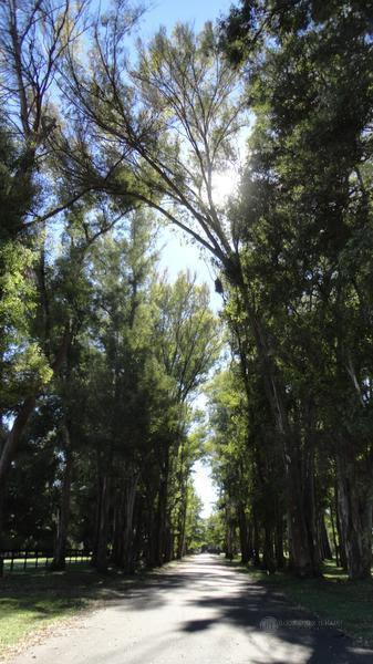 Foto Terreno en Venta en  Haras San Pablo,  Countries/B.Cerrado  Lote en Haras San Pablo, Club de Campo