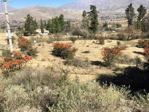 Foto Terreno en Venta en  La Quebrada,  Tafi Del Valle  3500 m2  La Quebradita  (Calle Ing. Maury)