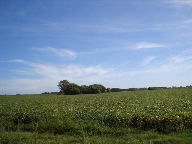 Foto Campo en Venta en  Gobernador Andonaeghi,  Exaltacion De La Cruz  31 hectáreas agrícolas