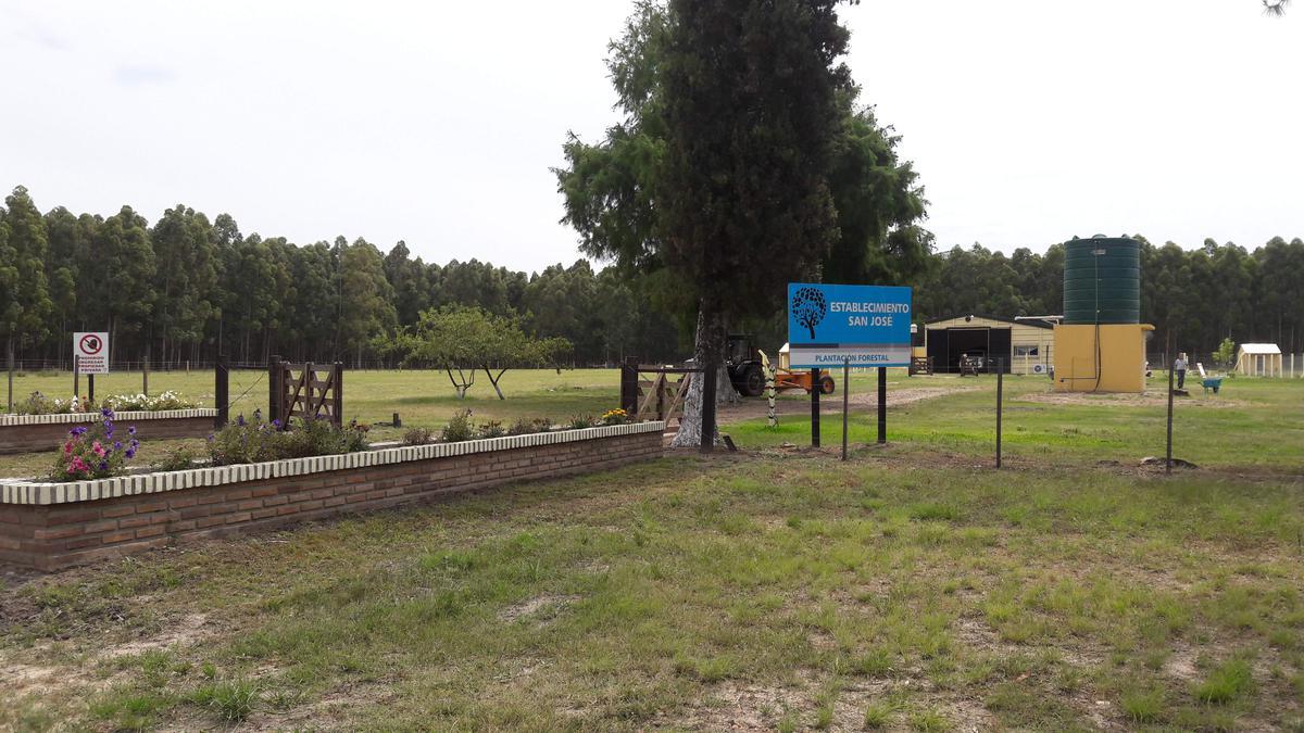 Foto Campo en Venta en  Federacion ,  Entre Rios  500 Has. Plantación Forestal