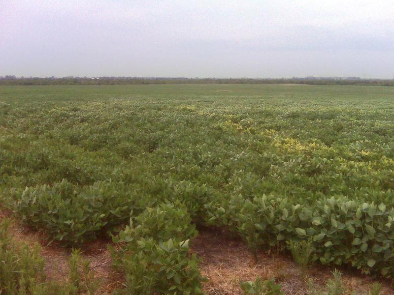 Foto Campo en Venta en  Gualeguaychu,  Gualeguaychu  535 Has. Gualeguaychu