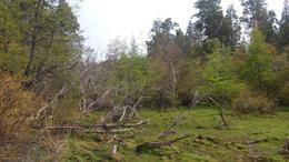 Foto thumbnail Campo en Venta en  Trevelin,  Futaleufu  Camino a Laguna Brychan