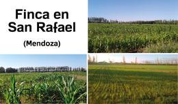 Foto thumbnail Fincas en Venta en  San Rafael ,  Mendoza  Finca en San Rafael - Mendoza